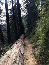 Fallen tree, also a guard rail