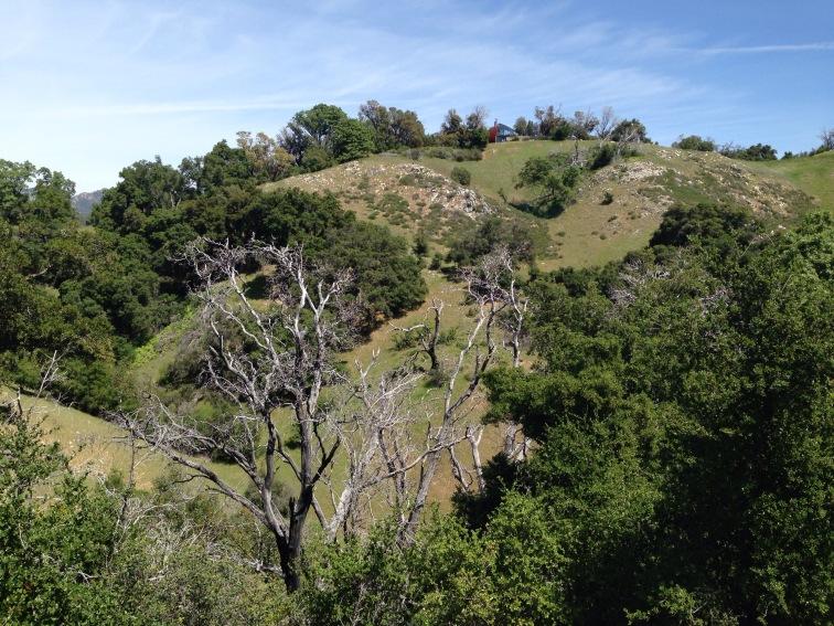 Top of Terrace Creak Trail