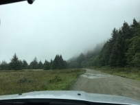 Drive to Fern Canyon