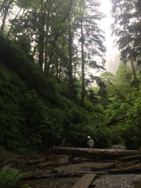 Fern Canyon - my favorite hike, that's me
